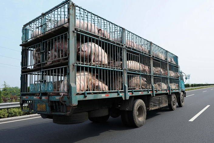 A pig transport on an expressway in Jiangsu province, on April 28. Photo: VCG