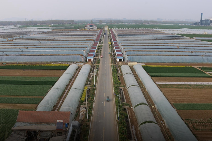 An aerial view of sheds belonging to the Xuhuanglu village co-op, Shandong province, in 2017. Photo: Courtesy of Liao Yue