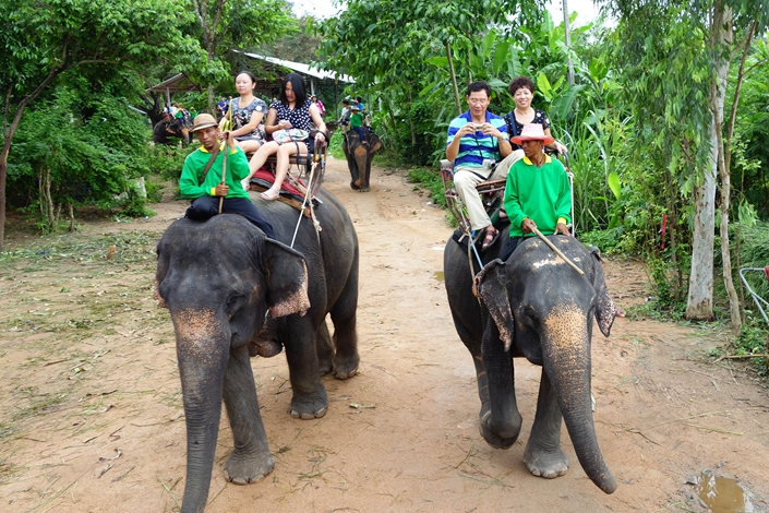 Chinese tourists ride elephants in Pattaya, Thailand, in November 2014. Photo: VCG