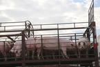 卢锋|猪肉价格飙升,问题出在供给侧