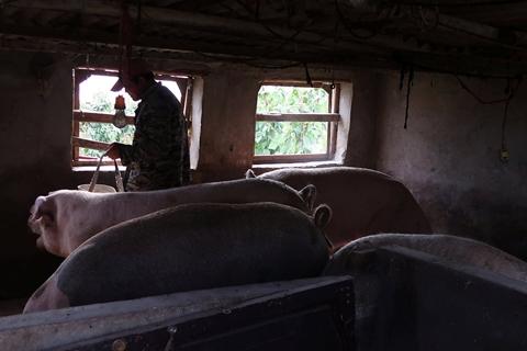 受非洲猪瘟影响 全球肉类产量预计20年来首跌