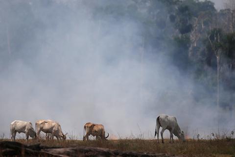 环保组织:农牧业成巴西原始森林被毁主因