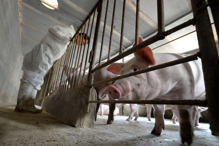 Muyuan Foods has announced it will set up five new animal-raising subsidiaries, just one week after announcing the establishment of 14 similar provincial-level units. Photo: China News Service