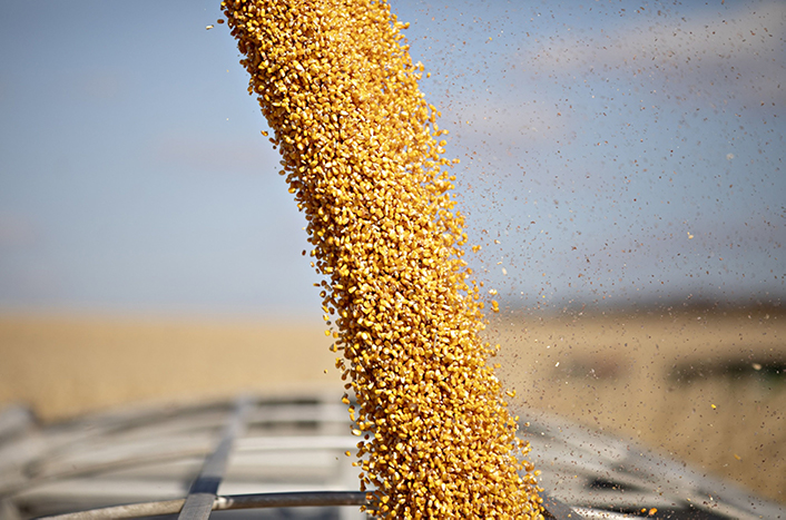 Corn is unloaded from a grain cart during harvest in Buda, Illinois, on Nov. 5. Photographer: Daniel Acker/Bloomberg