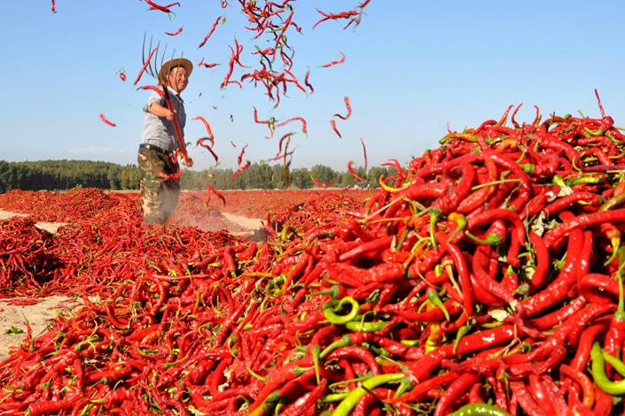 A man spreads red chili peppers to dry in Zhangye, Gansu province. Photo: Nikkei Asian Revew