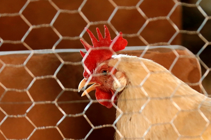China lifted a ban on U.S. chicken in late November. Photo: VCG