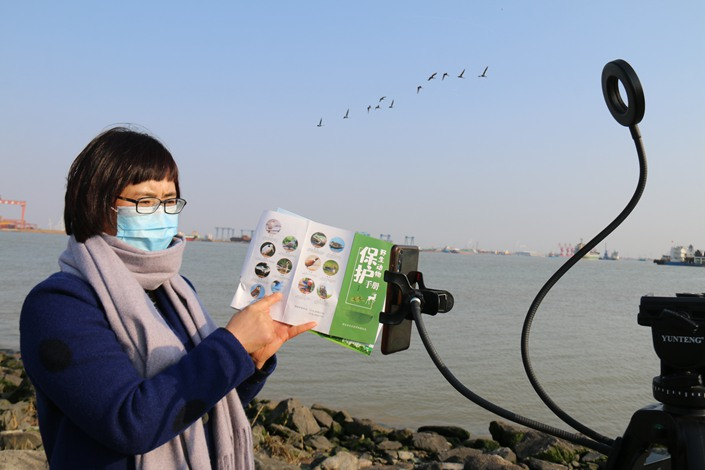 The director of a wildlife monitoring station in Lianyungang, East China's Jiangsu province, livestreams about wildlife protection on March 6. Photo: IC Photo