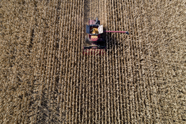 A worker harvests corn in the midwestern United States. Photo: Bloomberg