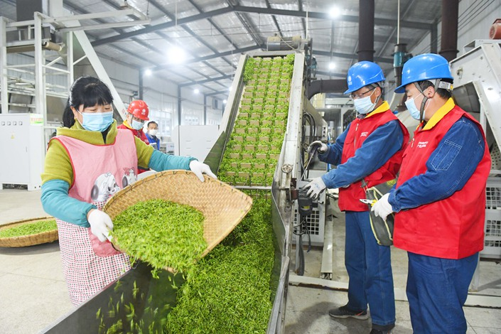 A tea factory in East China's Anhui province resumes production on March 22. Photo: IC Photo