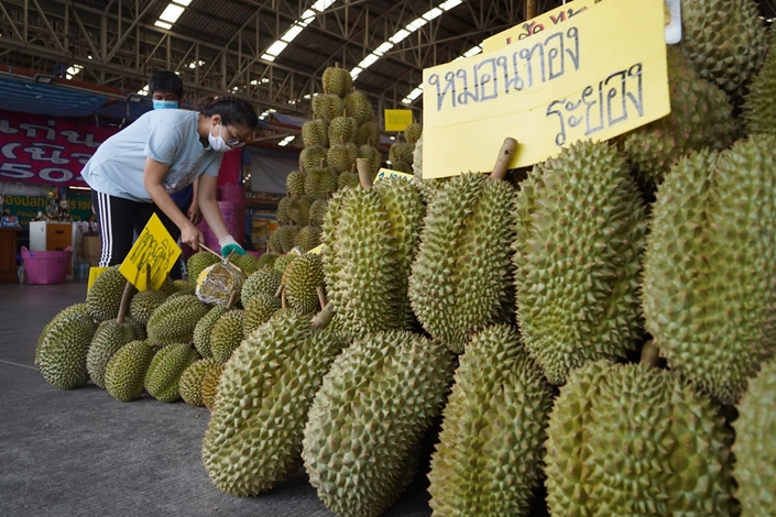 Chinese buyers visited Thai durian farmers in March, when the fruit was still raw, to ensure a supply despite the coronavirus pandemic. Photo: Nikkei Asian Review