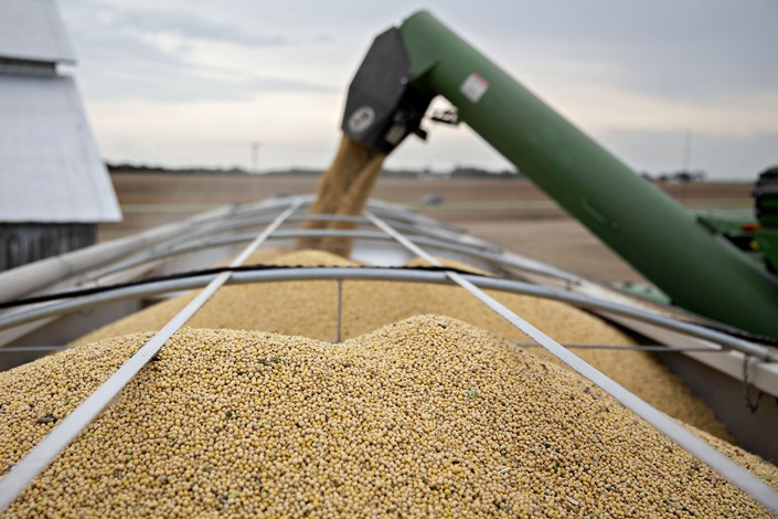 Soybeans are loaded into a grain cart during harvest in Wyanet, Illinois, Sept. 18, 2019.