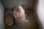 首个省级野生动物养殖退出方案出炉 湖南养殖户称补偿偏低