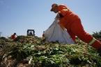 显影|北京六环外,一个村庄的垃圾分类试验