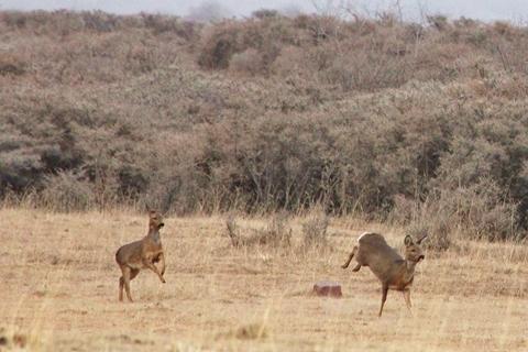 研究:515种脊椎动物极度濒危 物种灭绝危机迫在眉睫