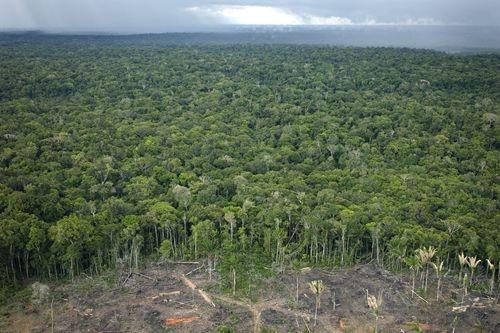 研究:2019年森林火灾致全球原始森林损失近三成