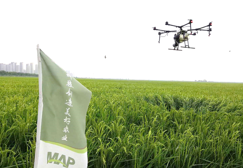 A drone flies over a Syngenta rice field. Photo: Syngenta