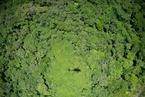 30年来全球4.2亿公顷森林遭毁 毁林速度近年放缓