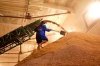 夏粮主产区小麦国家收购减少近千万吨 专家称农民不舍得卖