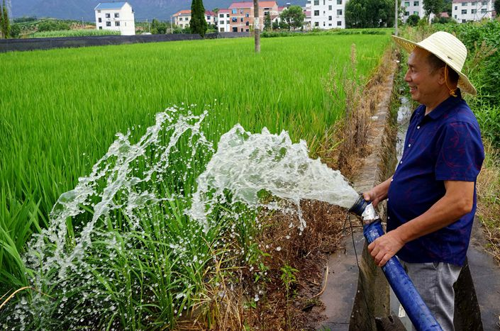 A farmer waters rice on Wednesday in Jinhua, East China's Zhejiang province.