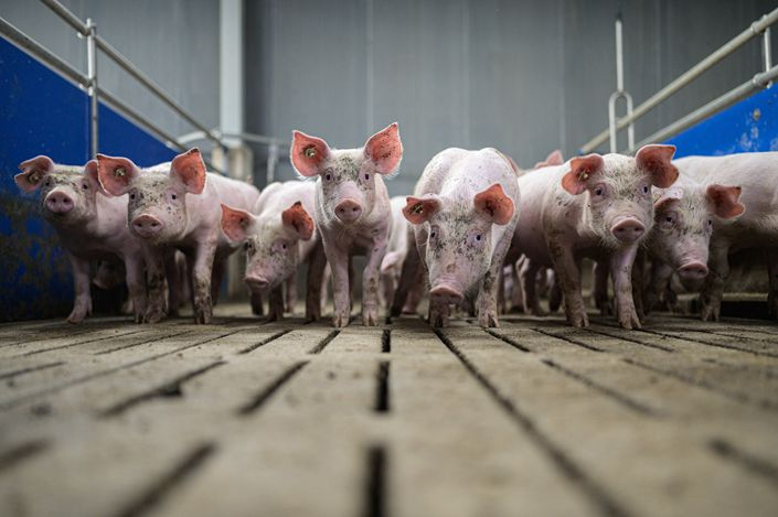 The African swine fever outbreak led to a 21.3% drop in pork production last year, which reached 42.55 million tons.