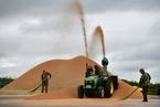 农民售粮期拉长 小麦托市收购同比减少1300万吨