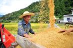 每年粮食损失3500万吨 国家粮储局强调节粮减损