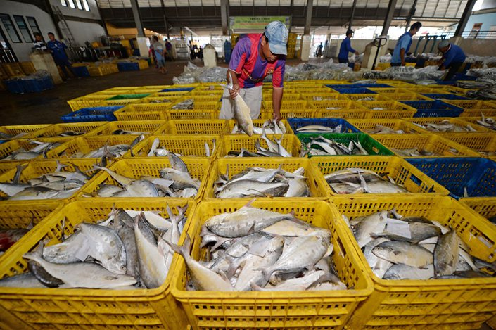 A worker arranges freshly caught fish ahead of an auction at a port in Jakarta, Indonesia, in September 2016.