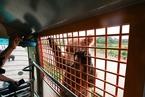 上海野生动物园一员工遭熊袭死亡 当日有车辆施工
