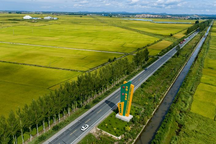 Rice fields in Jilin City, Jilin province, on Aug. 30.