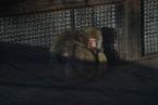 显影|极寒动物园