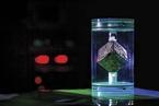 科学|海森堡、铀立方和龙尾巴