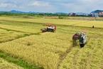 广东粮食自给率不足30% 省政府工作报告强调稳定粮食生产
