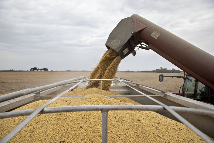 Soybeans are unloaded from a grain wagon during harvest in Wyanet, Illinois. Photo: Bloomberg