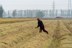 中央一号文件提出加快推进农业现代化 打好种业翻身仗