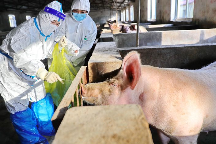 Center for Disease Control and Prevention staff take samples at a pig farm in Qinhuangdao, Hebei province, on Feb 9. Photo: VCG