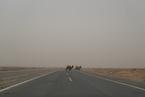 显影|逆沙而行系列报道之二:风沙线上的生态移民
