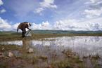 研究:人类活动并不必然破坏生物多样性