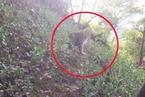 杭州野生动物世界三只金钱豹外逃 两只仍在追捕