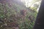 杭州野生动物园三只金钱豹外逃 主要负责人被控制