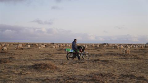【微纪录】在旱地牧羊的大学生——逆沙而行系列纪录片(2)