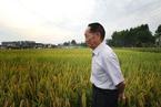 """唐世平:""""杂交水稻之父""""背后的科学与误区"""