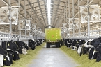 伊利分拆上游奶源优然牧业 香港IPO融资62亿港元