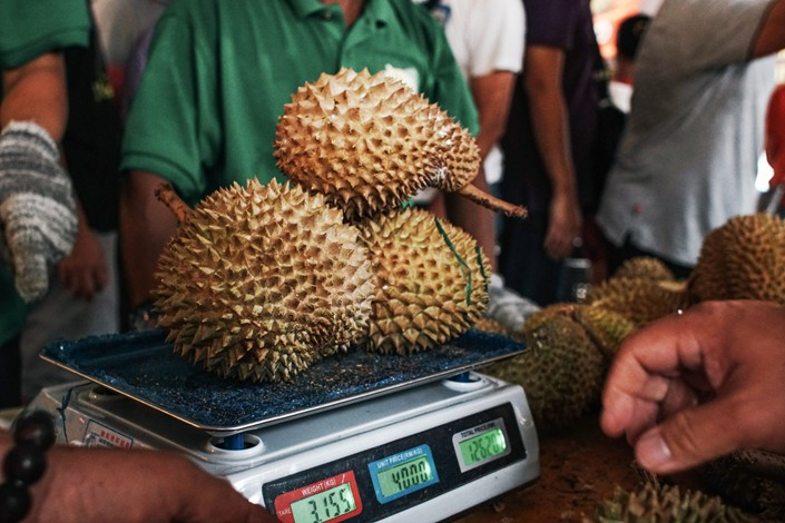 A vendor weighs Musang King durians during the Malaysia International Durian Festival. Photo: Bloomberg