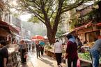 广州榕树去留之争 短片