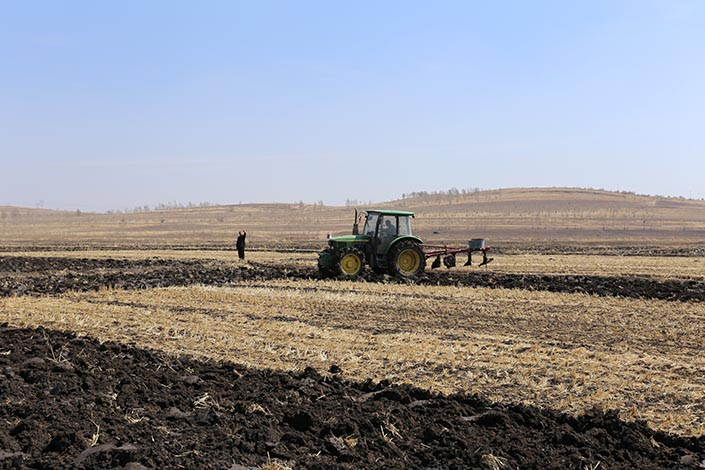 The farmers dig up black soil in North China's Inner Mongolia autonomous region on April 15, 2019. Photo: IC photo