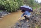 中央环保督察:云南高原湖泊保护不力 天然林减少