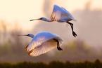 全球生物多样性框架草案发布 将在昆明大会提交审议