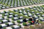 福壽園樣本:殯葬改革是否需要個性化服務?