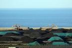 能源內參|煤炭產能釋放受推動 或新增產能1.5億噸以上;LNG進口到岸價指數大幅上漲