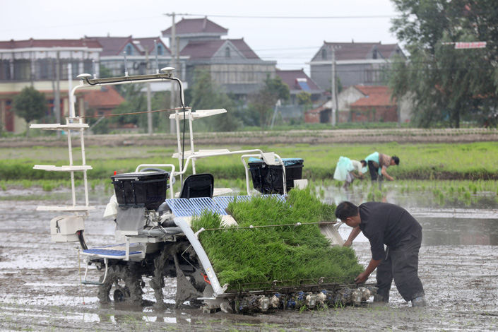 An unmanned rice transplanter linked to BeiDou works in the field in Nantong, East China's Jiangsu province, on July 2. Photo: VCG